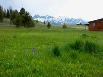 Луга Sawtooth - Айдахо Стоковые Изображения RF