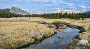 Луга Tuolumne, национальный парк Yosemite Стоковое фото RF