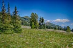 Луга wildflowers стоковые изображения rf