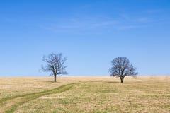Луг весны и 2 дерева пасьянса под голубым небом Стоковые Фотографии RF