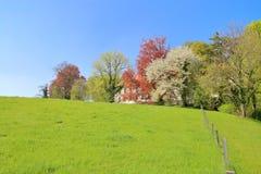 Луг весны перед домом Стоковые Фото