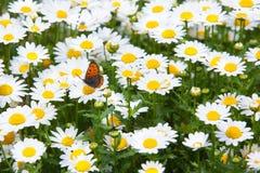 Луг весны с бабочкой стоковое фото rf