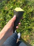 Луг весны с зеленой травой и желтыми одуванчиками Можно увидеть ноги девушки которая отдыхает, держа мороженое в a стоковая фотография rf