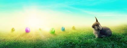 Луг весны с кроликом Стоковая Фотография