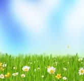 Луг весны с цветками стоцвета стоковое изображение
