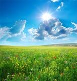 Луг весны цветков Стоковая Фотография