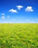 Луг весны стоковые изображения rf