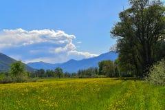Луг вполне зацветая желтых цветков Стоковое Изображение RF