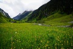Луг в горных вершинах перед горой стоковые фотографии rf