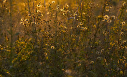 Луг в заходе солнца Стоковая Фотография RF