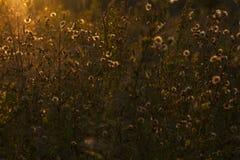 Луг в заходе солнца Стоковая Фотография