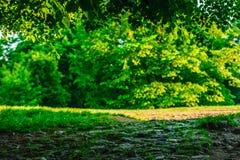 Луг в конце скалистой дороги Стоковые Изображения RF