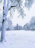 Луг в парке в зиме Стоковое Изображение RF