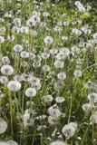 Луг в последней весне Стоковые Фото