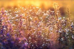 Луг в свете захода солнца Стоковые Фотографии RF