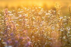 Луг в свете захода солнца Стоковое Фото