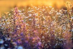Луг в свете захода солнца Стоковые Изображения