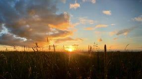 Луг в свете захода солнца стоковые изображения rf