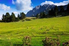 Луг гористой местности в солнечном августовском дне Стоковая Фотография