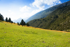 Луг гористой местности в солнечном дне Стоковая Фотография