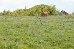 Луг гористой местности цветя Стоковые Фотографии RF