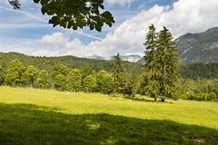 Луг горы около Grainau, Германии Стоковые Фото