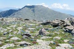Луг горы Пиренеи одичалый Стоковая Фотография