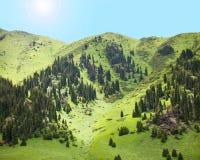 Луг горы спруса лета ландшафта природы стоковые изображения