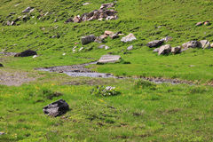 Луг горы Стоковая Фотография RF