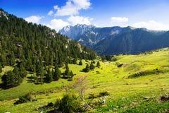 Луг горы Стоковое Фото