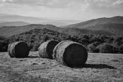 Луг горы Стоковые Изображения