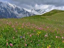 Луг горы Стоковая Фотография