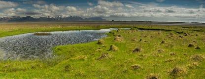 Луг лета в Исландии Стоковое Изображение