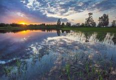 Луг захода солнца Стоковое Фото