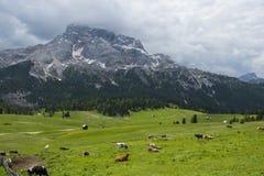 Луг зеленой травы в горах Италии Стоковое Изображение RF
