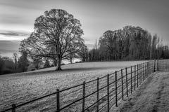 Луг зимы в Ирландии стоковые фотографии rf
