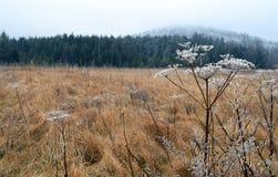 Луг зимы, Западная Вирджиния стоковая фотография