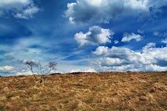 Луг и голубое, облачное небо Стоковое Изображение RF