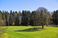 Луг и деревья весны Стоковое Изображение