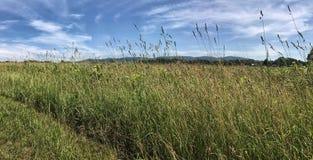 Луг и дистантные горы Стоковое Фото
