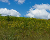 Луг и небо лета Стоковая Фотография RF
