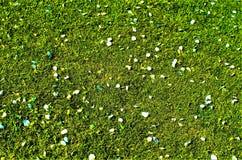 Луг и цветки Стоковая Фотография