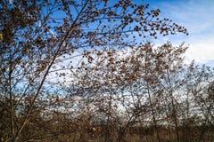 Луг и цветок Стоковые Изображения