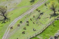 Луг ландшафта переноса наклона устрашает пасти взгляд дороги деревни с Стоковые Фото