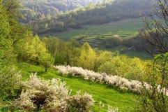 Луг на наклоне горы Стоковое Изображение RF