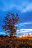 Луг на ноче Стоковое Фото
