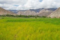 Луг на Leh, Ladakh Стоковая Фотография