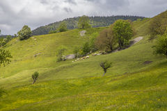Луг около le Vernet на col Mariaud с пасти коров Стоковая Фотография