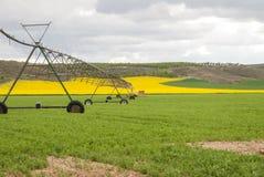Луг орошенный боковой системой брызга на колесах Стоковая Фотография RF