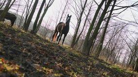 Луг лошади сток-видео
